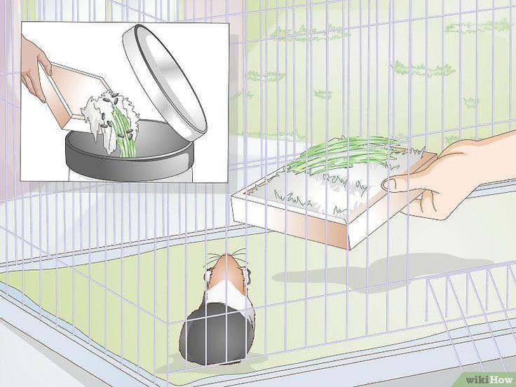 Как сделать своими руками туалет и приучить к нему хомяка