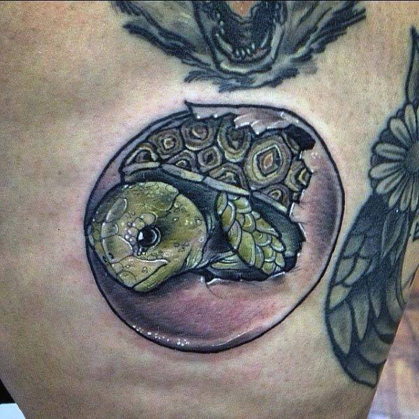 Талисман черепаха. значение символа и особенности выбора