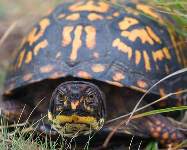 Сонник ядовитая черепаха. к чему снится ядовитая черепаха видеть во сне - сонник дома солнца. страница 5
