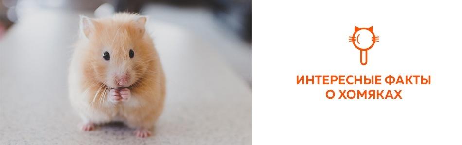 27 интересных фактов о хомяках
