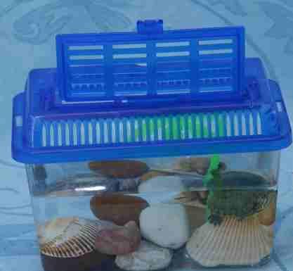Перевозка черепахи | мои домашние питомцы