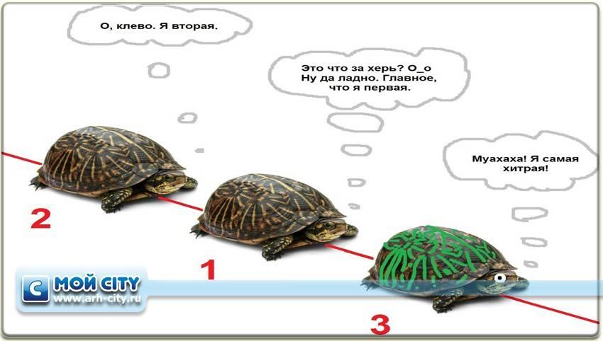 Загадка про черепаху для детей — 53 медленные отгадки