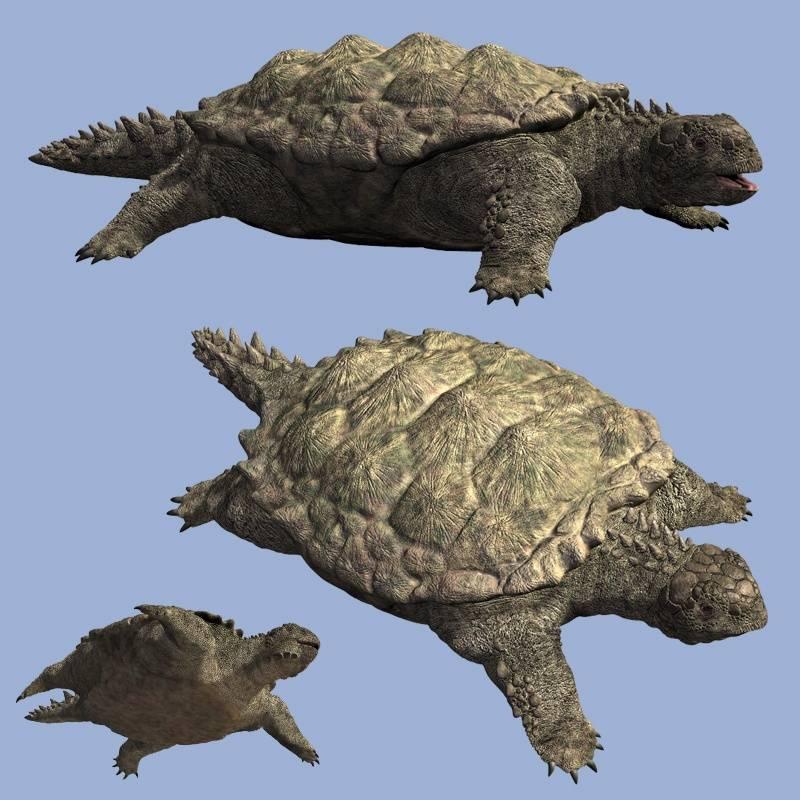 File:череп зеленой черепахи и слепок черепа черепахи триассохелиса.jpg