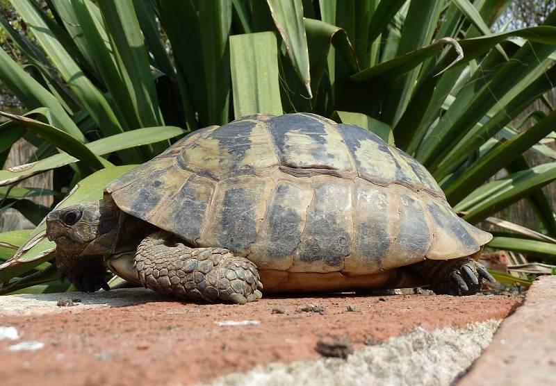 Продолжительность жизни черепах. возраст черепах