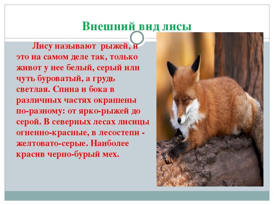 Виды лис (лисиц)