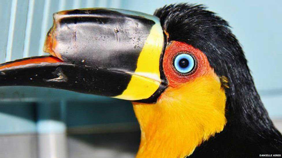 Что делать, если вы нашли травмированную птицу - энциклопедия владельца птицы