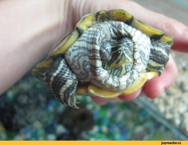 Болезни черепах