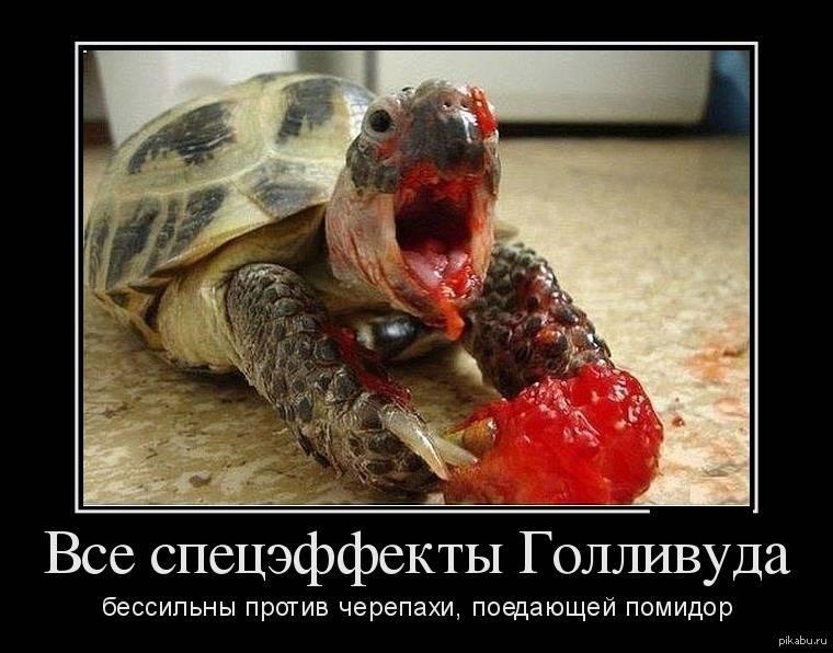 Приличные анекдоты про черепах