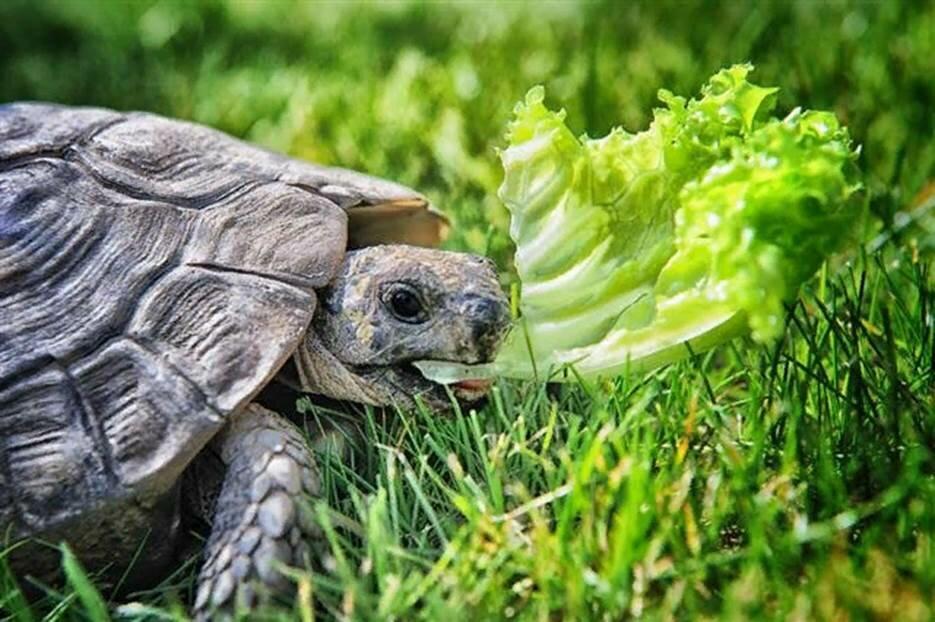 Как содержать черепаху в домашних условиях?