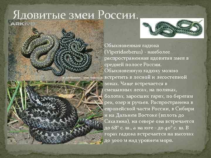 Ядовитые и домашние виды змей