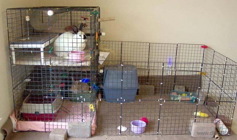 Уход и содержание карликовых декоративных кроликов