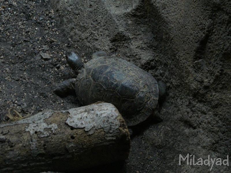 Где посмотреть на черепах в россии (центральный фо)?