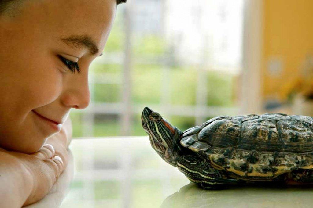 Можно ли завести черепаху при аллергии