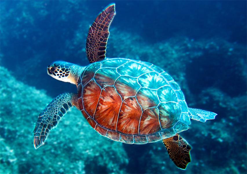 Все виды черепах. их разновидности и классификация1 min read