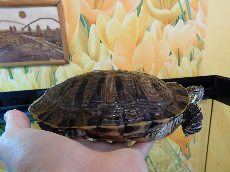 Лечение рептилий, черепах и других экзотических животных в москве