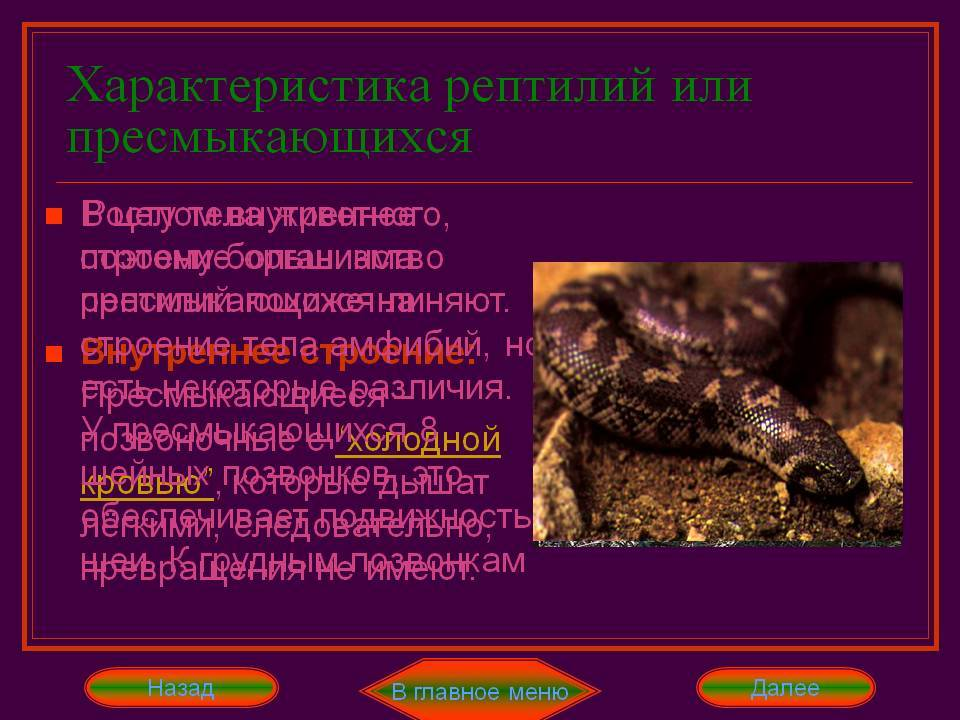 71304-1 (гипо и гиперавитаминозы у рептилий), страница 2