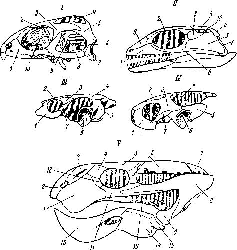 Как связаны форма черепа и характер