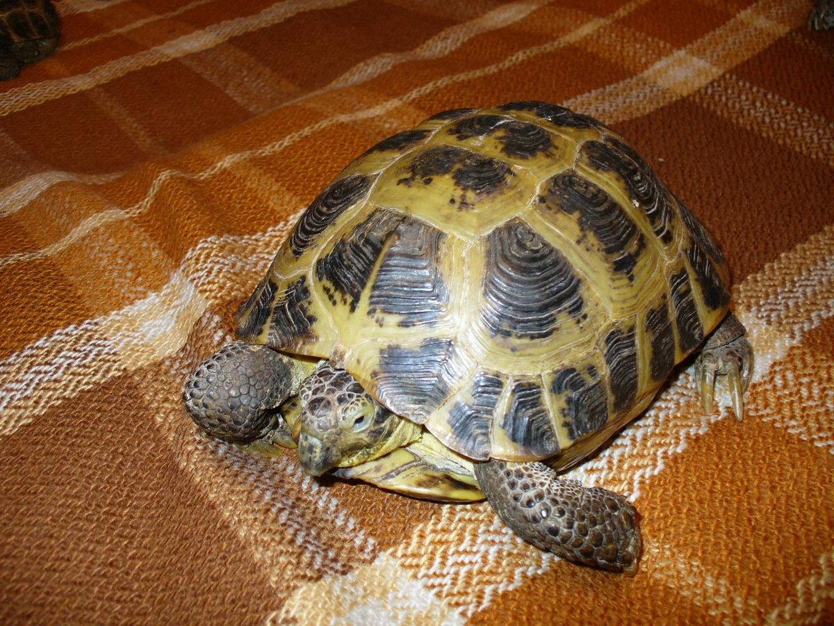 Как определять возраст черепах