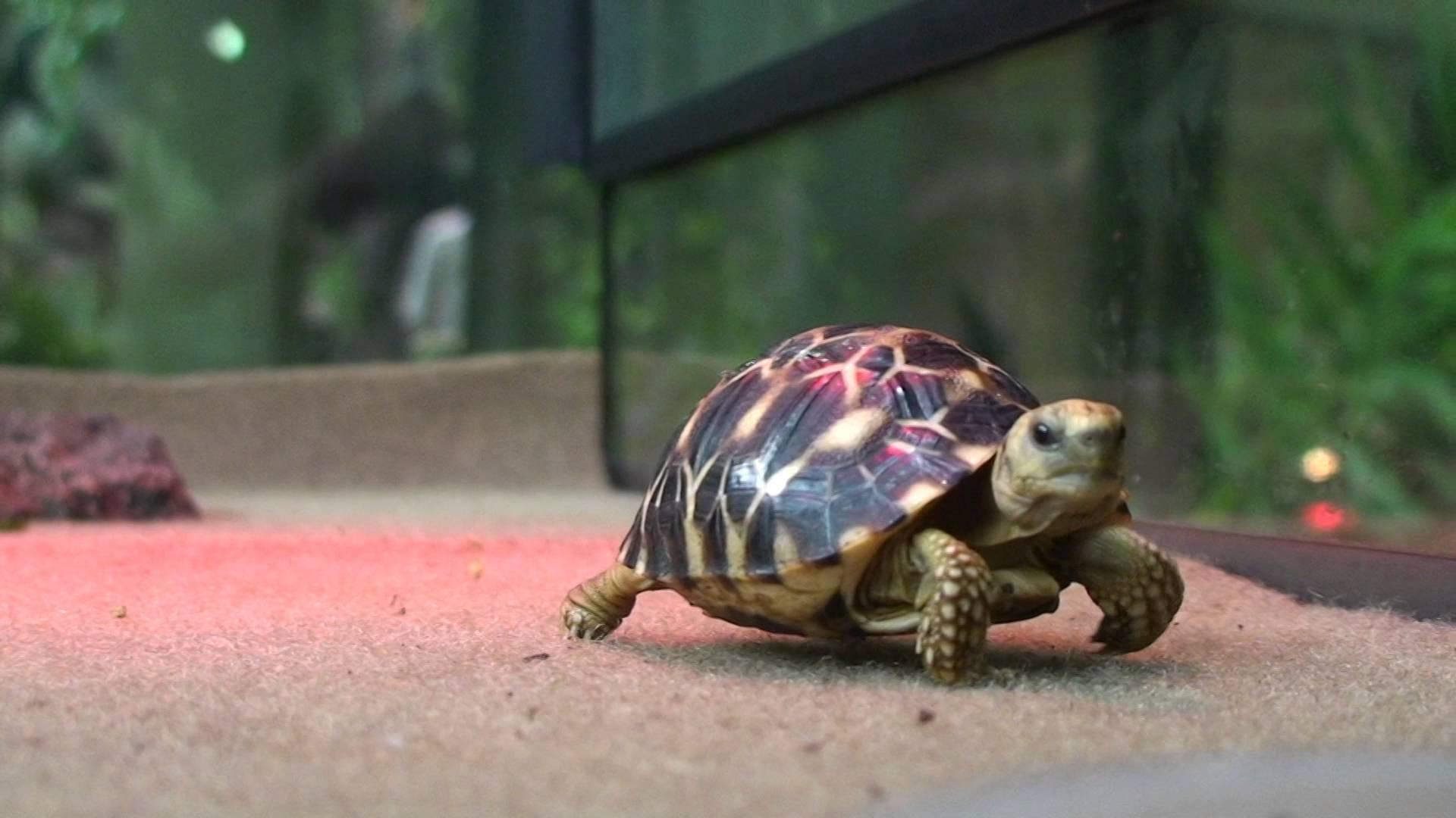 Сонник прирученная бистрая черепаха. к чему снится прирученная бистрая черепаха видеть во сне - сонник дома солнца. страница 6