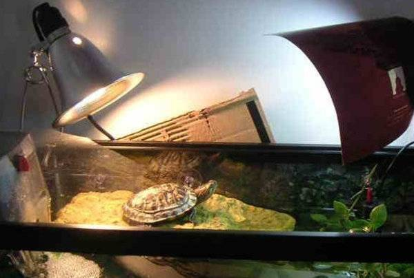 Какая ультрафиолетовая лампа нужна для красноухой черепахи