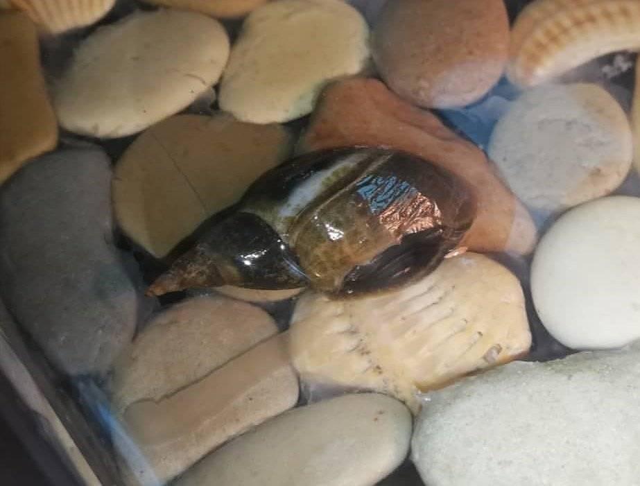 Срочно помогите (красноухая черепашка) - запись пользователя анастасия (na89) в сообществе домашние животные в категории улитки, черепахи, рептилии - babyblog.ru