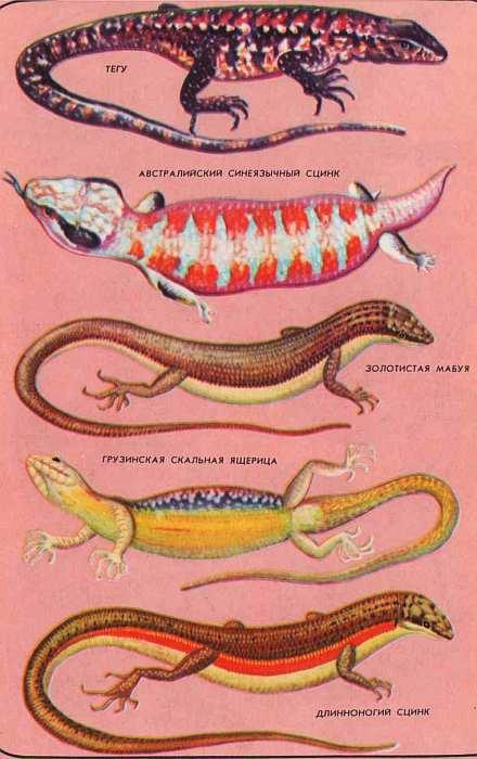 Факторы, определяющие распространение амфибий и рептилий на водных объектах казани текст научной статьи по специальности «биологические науки»