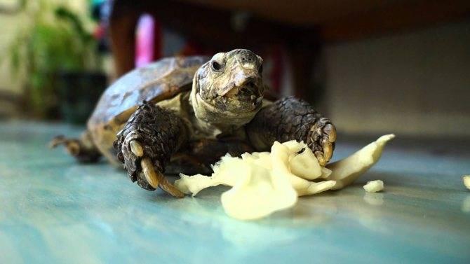 Как кормить черепаху: полезные советы и рекомендации