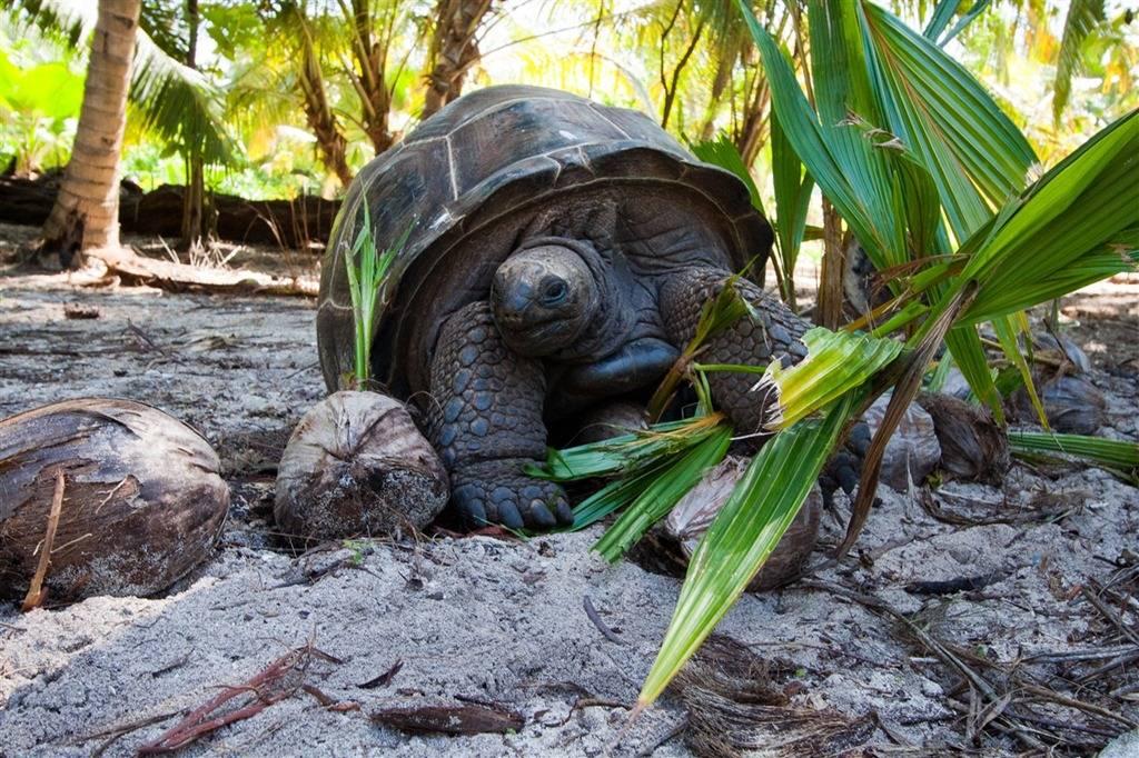 Сейшелы - страна с офшорами, пляжами и гигантскими черепахами
