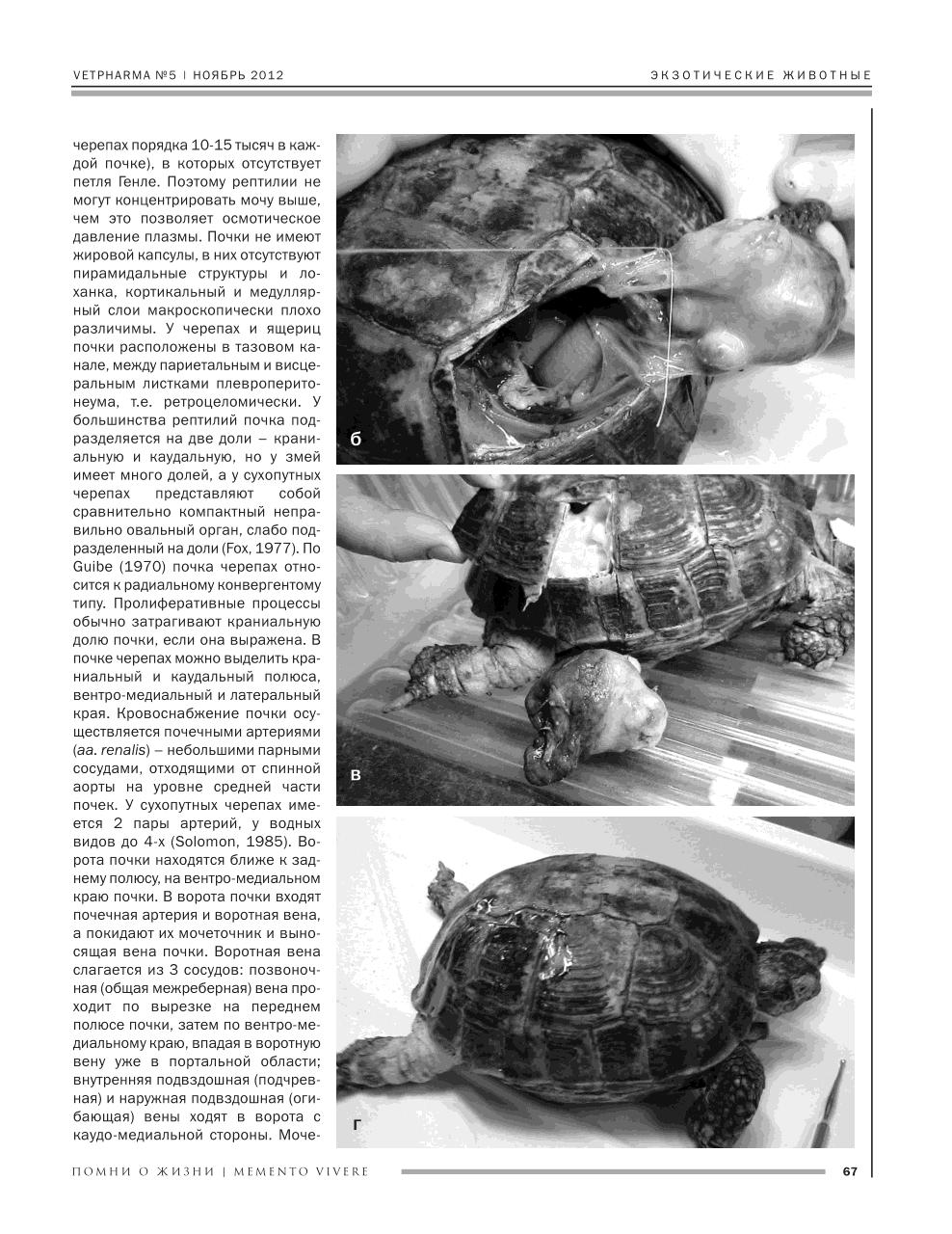 Ветеринария рептилий: исследования в московском зоопарке