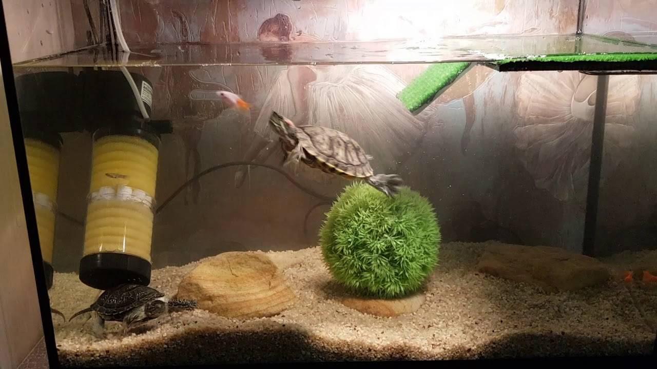 Что означает черепаха по фэн-шуй – описание символа, советы по расположению