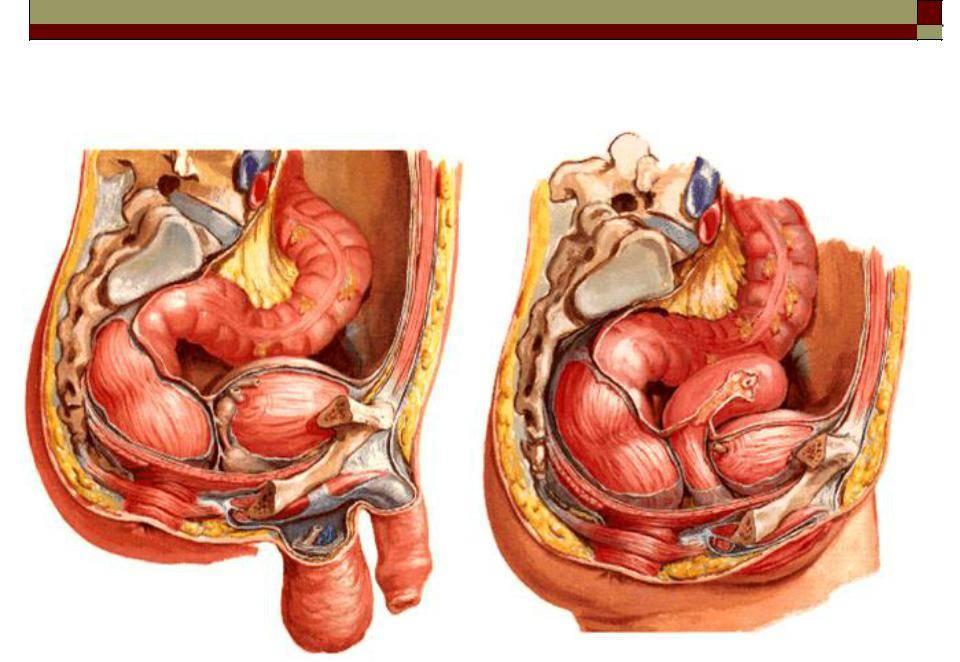 Опущение кишечника