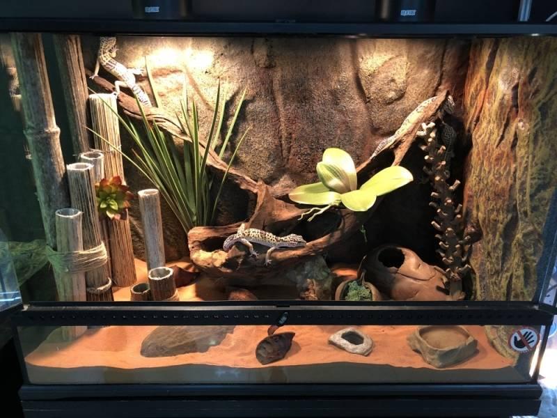 Террариум в интерьере квартиры: особенности содержания (26 фото)
