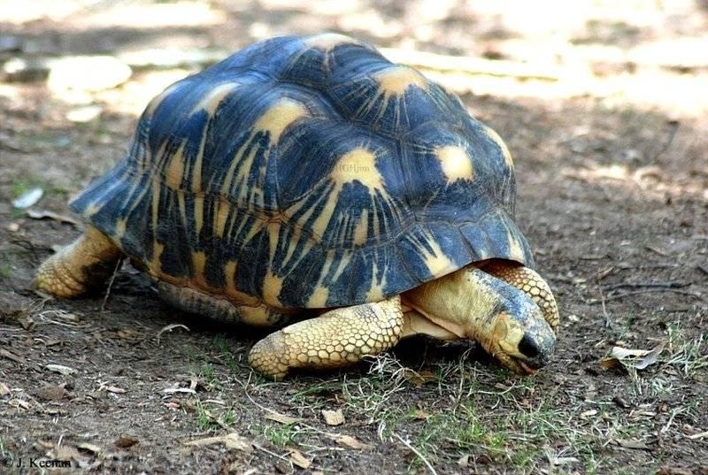 Мартышка бразза, эквадорский головач, лучистая черепаха, сайга, привиденьевые: самые необычные животные