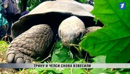 Зимняя спячка у черепах