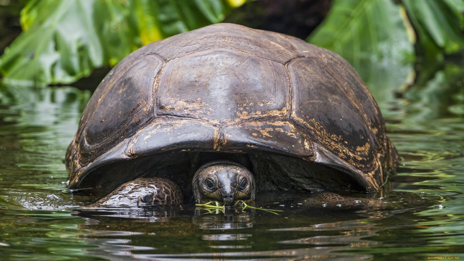 Черепашка в аквариуме: украшение или проблема?