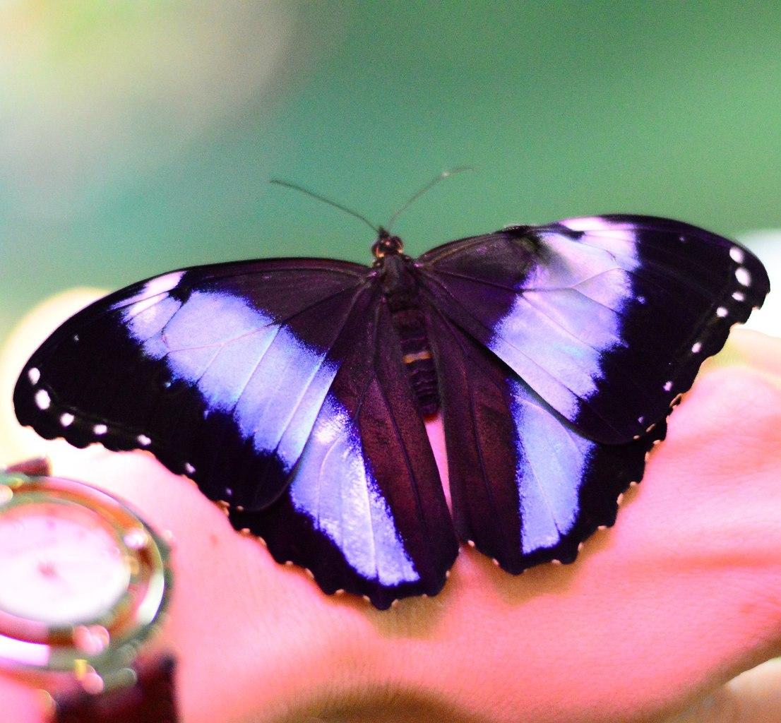 Самые красивые бабочки в мире: фото, названия, описание