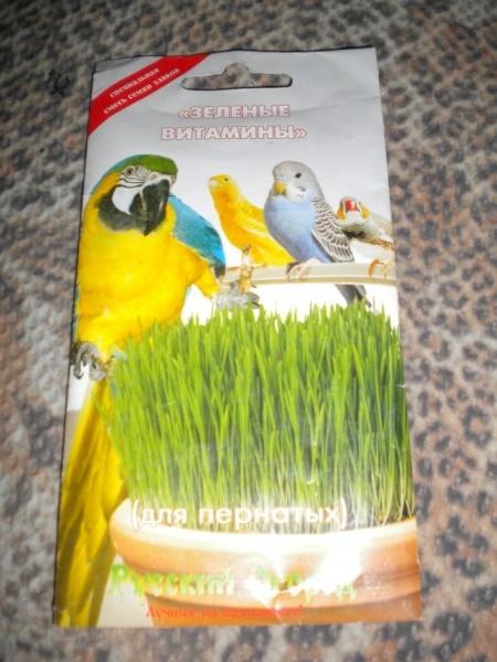 Трава для волнистых попугаев: можно ли укроп, петрушку и другую зелень
