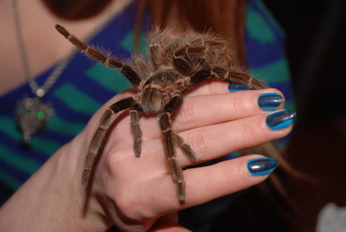 Укус паука-птицееда