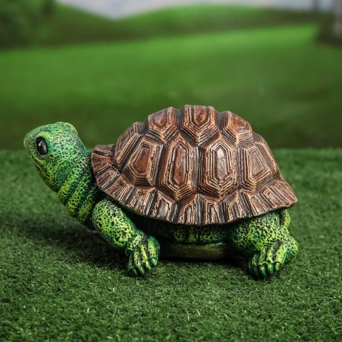 Вымершие виды - черепахи.ру - все о черепахах и для черепах
