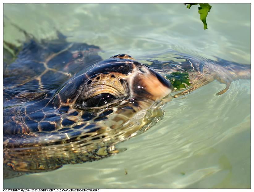 Как купать черепаху | наши лучшие друзья