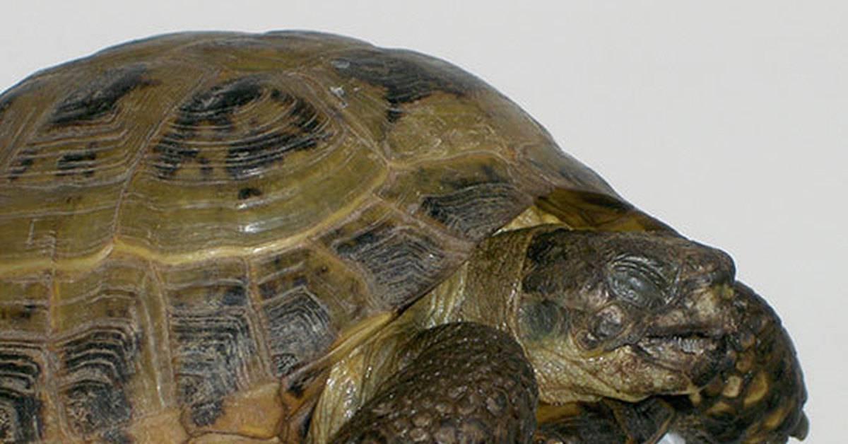 Кальций для черепах