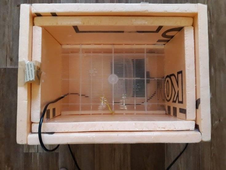 Особенности инкубации куриных яиц в домашних условиях