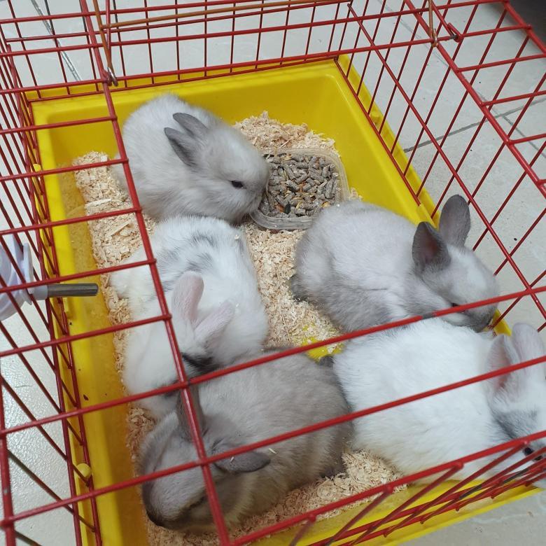 Декоративный кролик: цена в зоомагазине и на рынке
