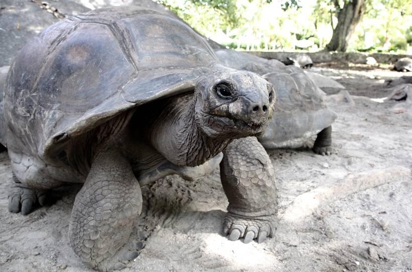 5 мест, где можно поплавать вместе с черепахами