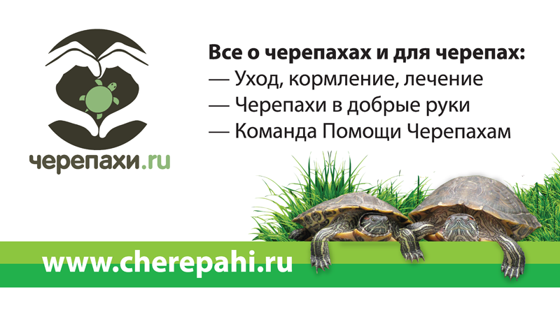 Кпч - черепахи.ру - все о черепахах и для черепах