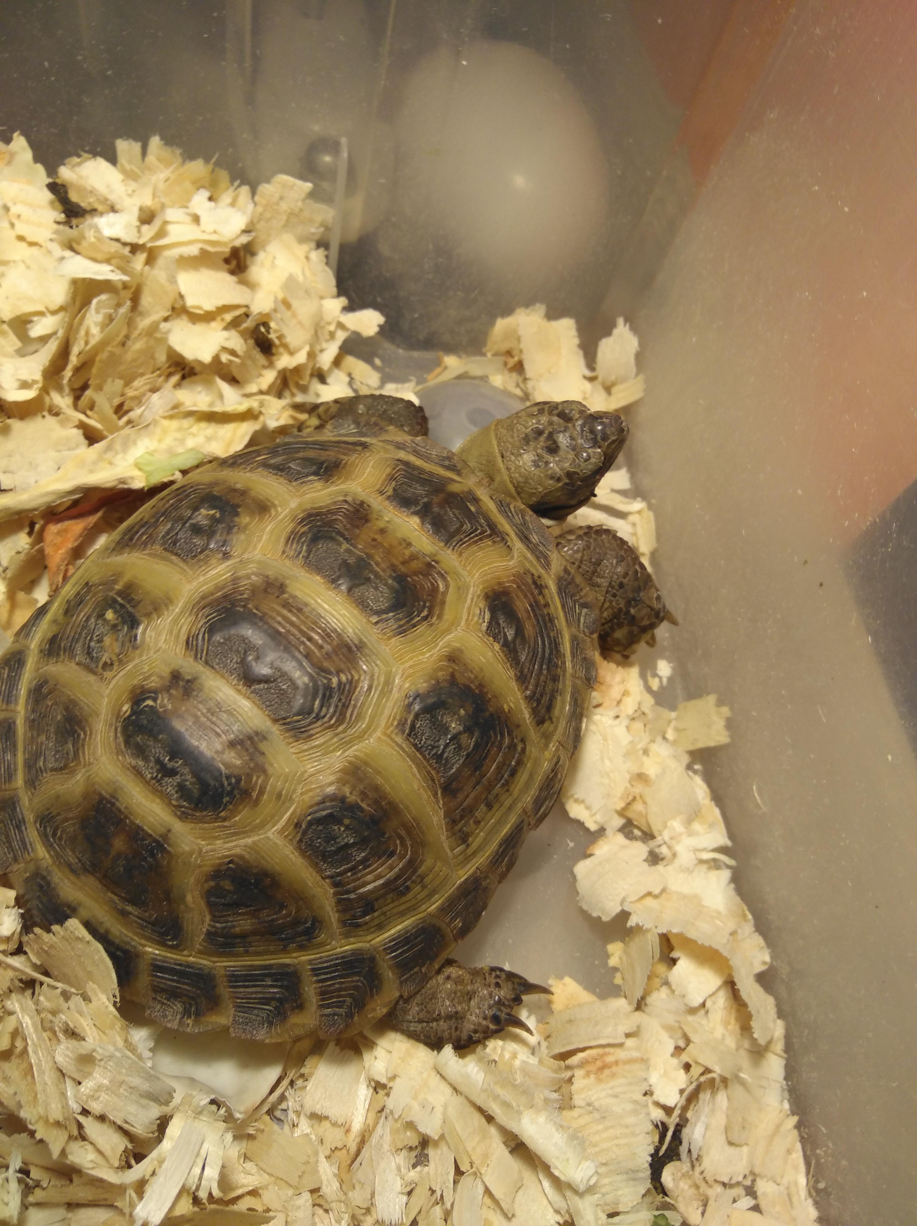 Как выбрать сухопутную черепаху