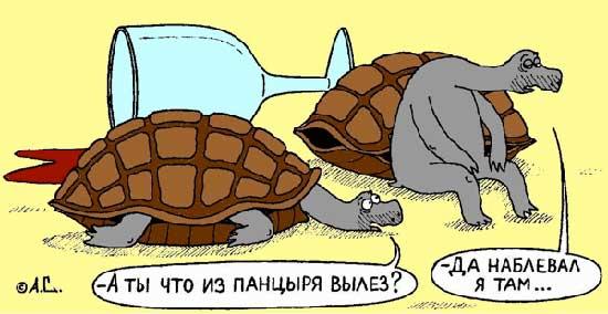 Анекдот Про Черепаху