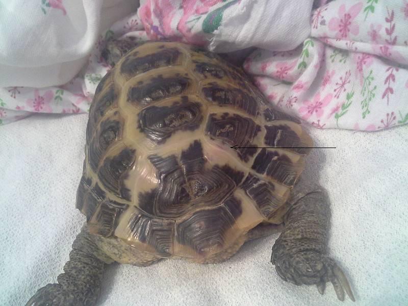 Лечение сухопутных и водных черепах. особенности их содержания