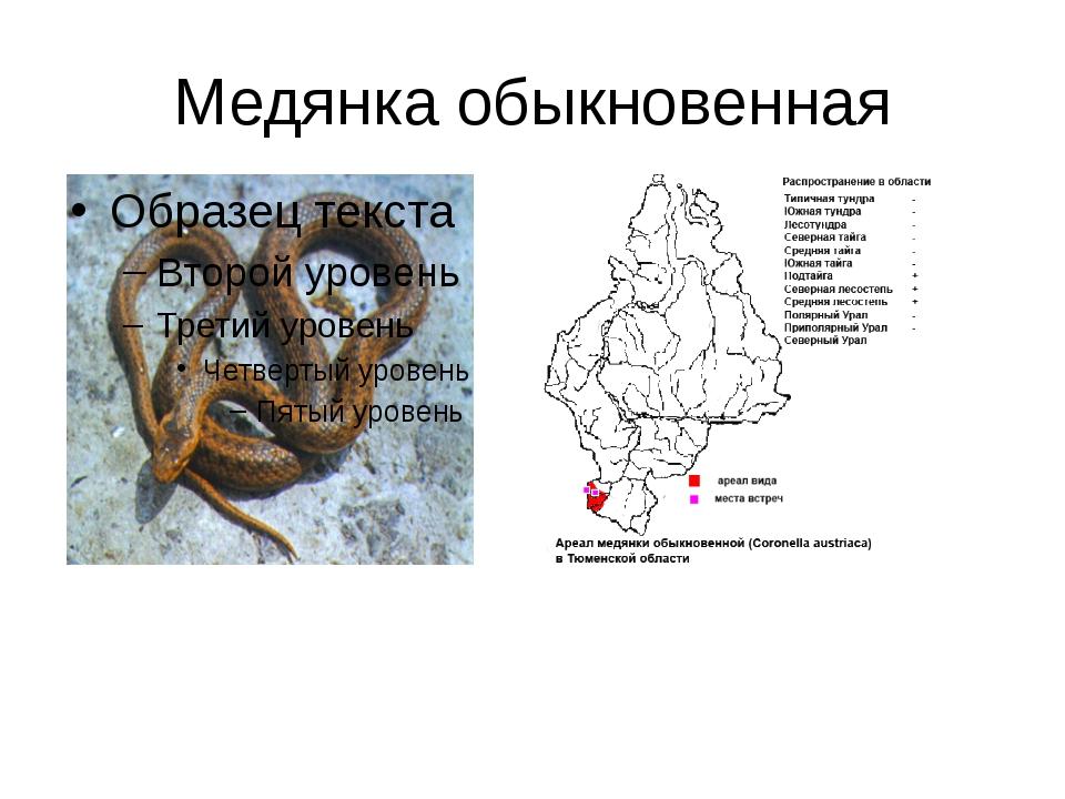 Медянка: описание, ареал, особенности поведения и образа жизни
