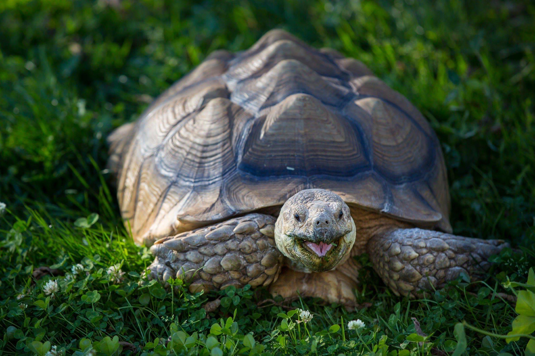 Лечение черепах - заболевания и их симптомы